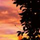 Auringonlasku ja puut