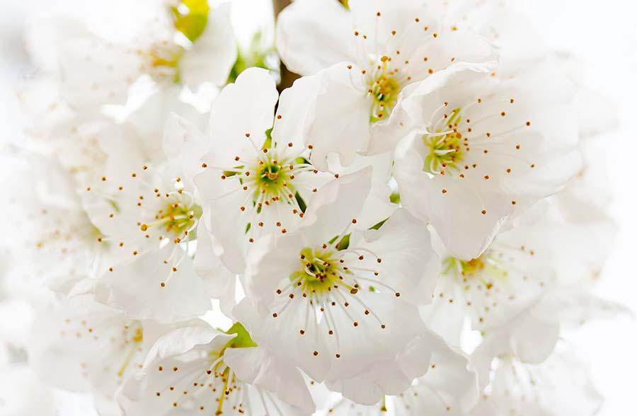 Mindfulness flower